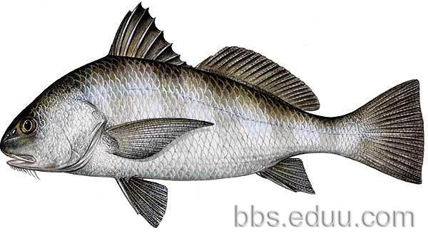 鱼类名称大汇总 一年级
